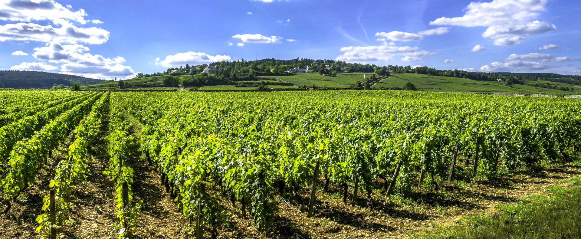 France vineyards