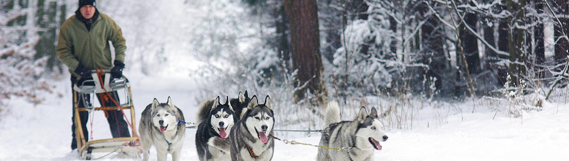 Dog-sledding in Lapland