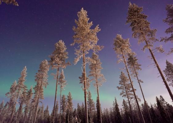 Aurora Borealis Scandinavia