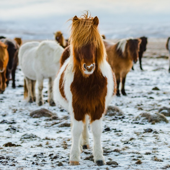 Best Iceland Winter Tours