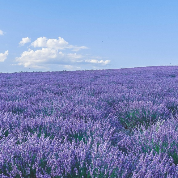 Southern France Vacation & Tour Packages