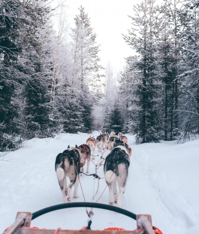 Finland Husky ride